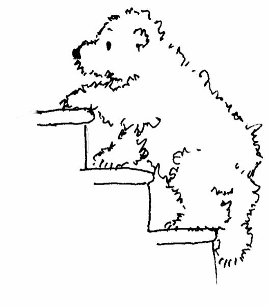 Polar Bear on the stairs