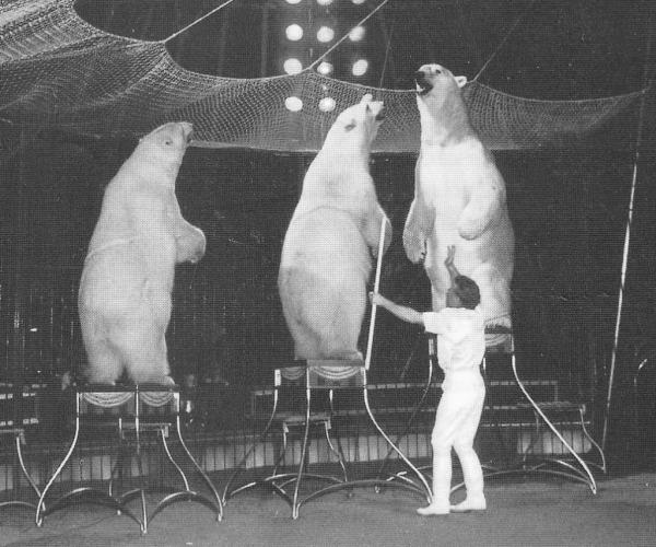 Gerd Simoneit mit drei Eisbären in der Manege 1985