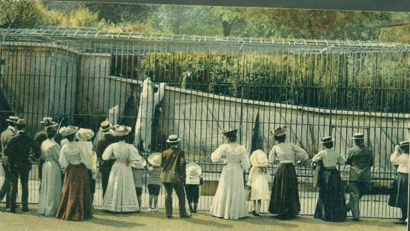 London Regent's Park Zoo um 1900